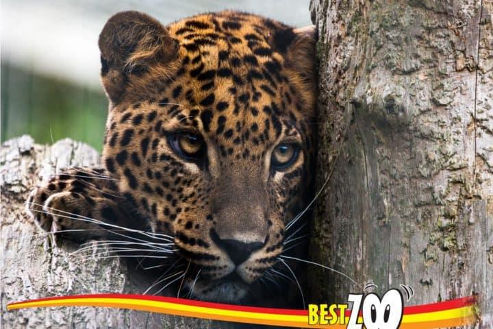 Met korting naar dierenpark Best ZOO | NapPas