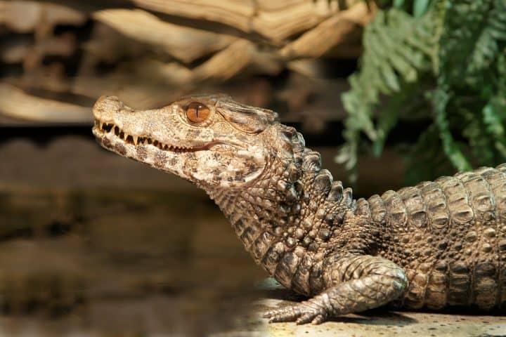 Reptielenhuis de Aarde Korting NapPas