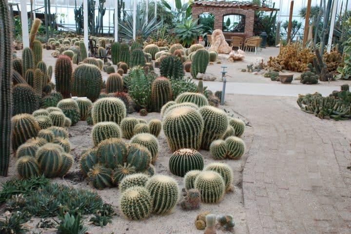 Belevingspark Cactus Oase met korting | Voordeeluitjes van NapPas
