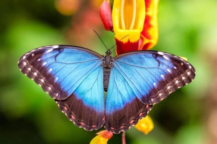 Met korting naar Vlindertuin Vlindorado | Voordeeluitjes van NapPas