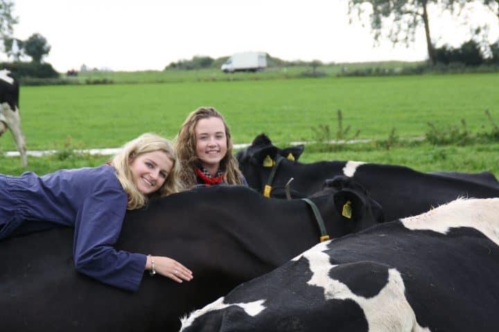 Koe-knuffelen met korting | Voordeeluitjes van NapPas