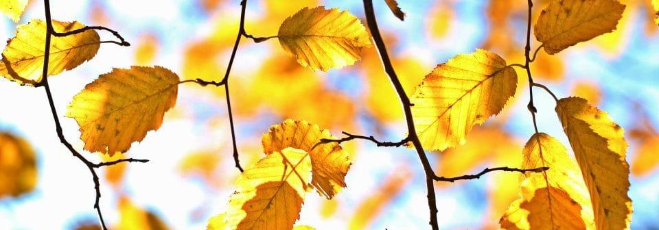 Herfst uitjes NapPas