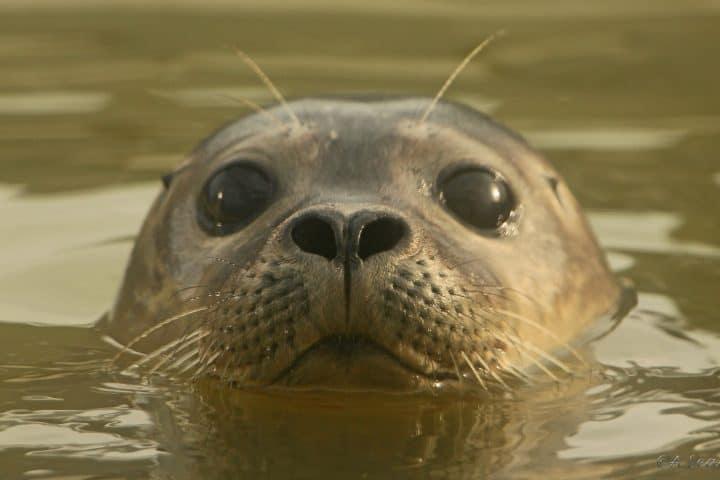 Zeehondenopvang Stellendam
