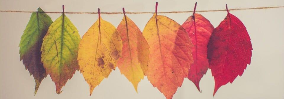 Herfst-uitjes